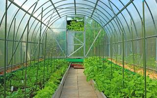 Выращивание овощей в теплице — это здоровое питание круглогодично