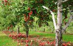 Плодовые деревья: особенности