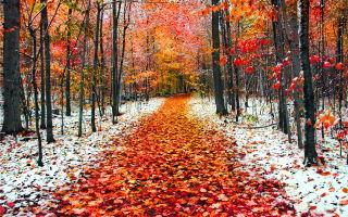 Народные приметы на ноябрь