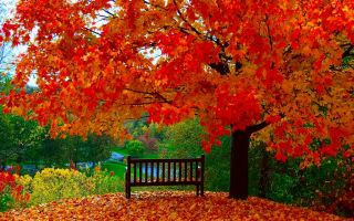 Народные приметы на октябрь