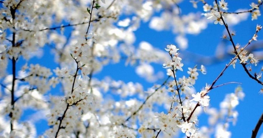 Народные приметы на апрель